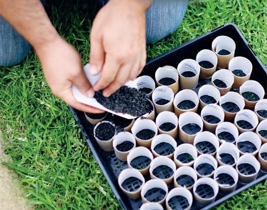 En 8 pasos germiná semillas reusando tubos de cartón
