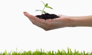 Eco Emprendedores sustentables