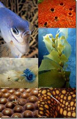 El 22 de mayo se celebra el Día Internacional de la Diversidad Biológica