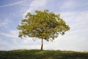 ¿Por qué necesitamos el Día de la Tierra? 7 problemas que tenemos que resolver