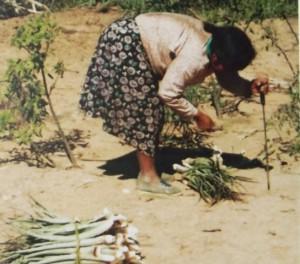Mujeres wichi - recolección