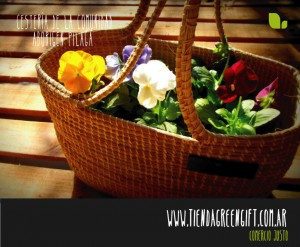 Canasta con plantines