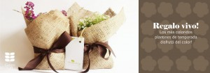 baner-web-regalo-vivo