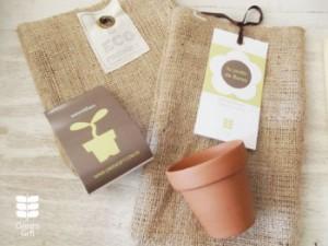 Nuevo imagen - Kit de cultivo floral