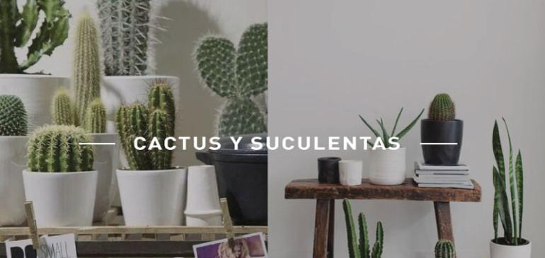 6 imágenes inspiracionales para decorar tu espacio con suculentas y cactus