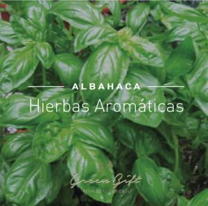 Hierbas-albahaca